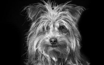 Over jonge honden en complimenten…