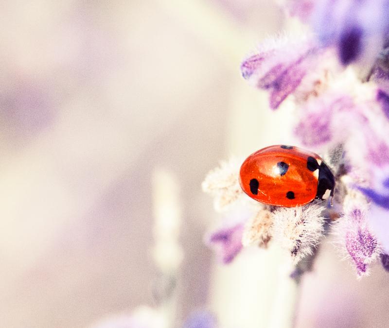 Ik kom terug als insect….